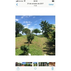 Real Estate > Properties for Sale > Land lotes campestre frente a hertilandia
